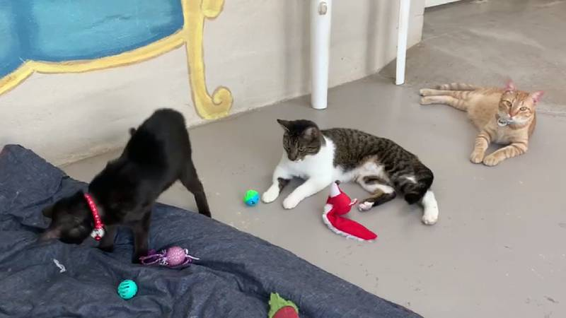 Best Friends for Life spays and neuters cats