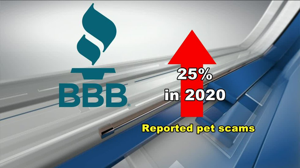 Be looking out! Pet scams are on the rise